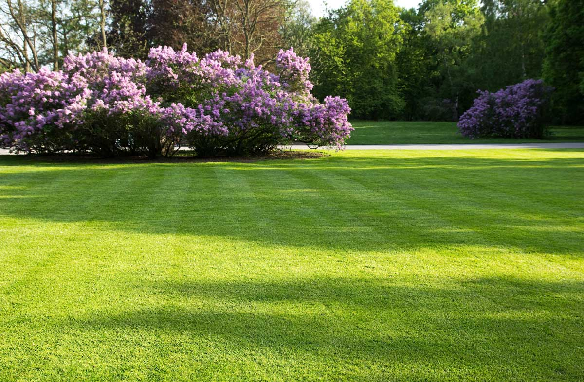 Give Your Lawn A Spring Wake-up Call