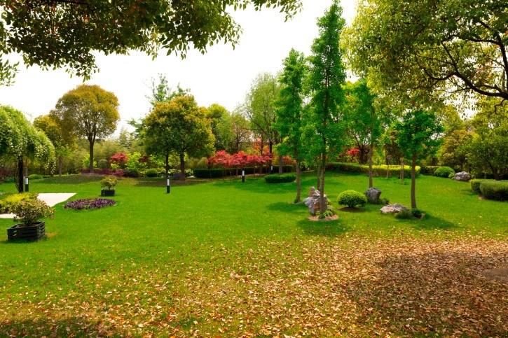 Fall-leaves-in-backyard