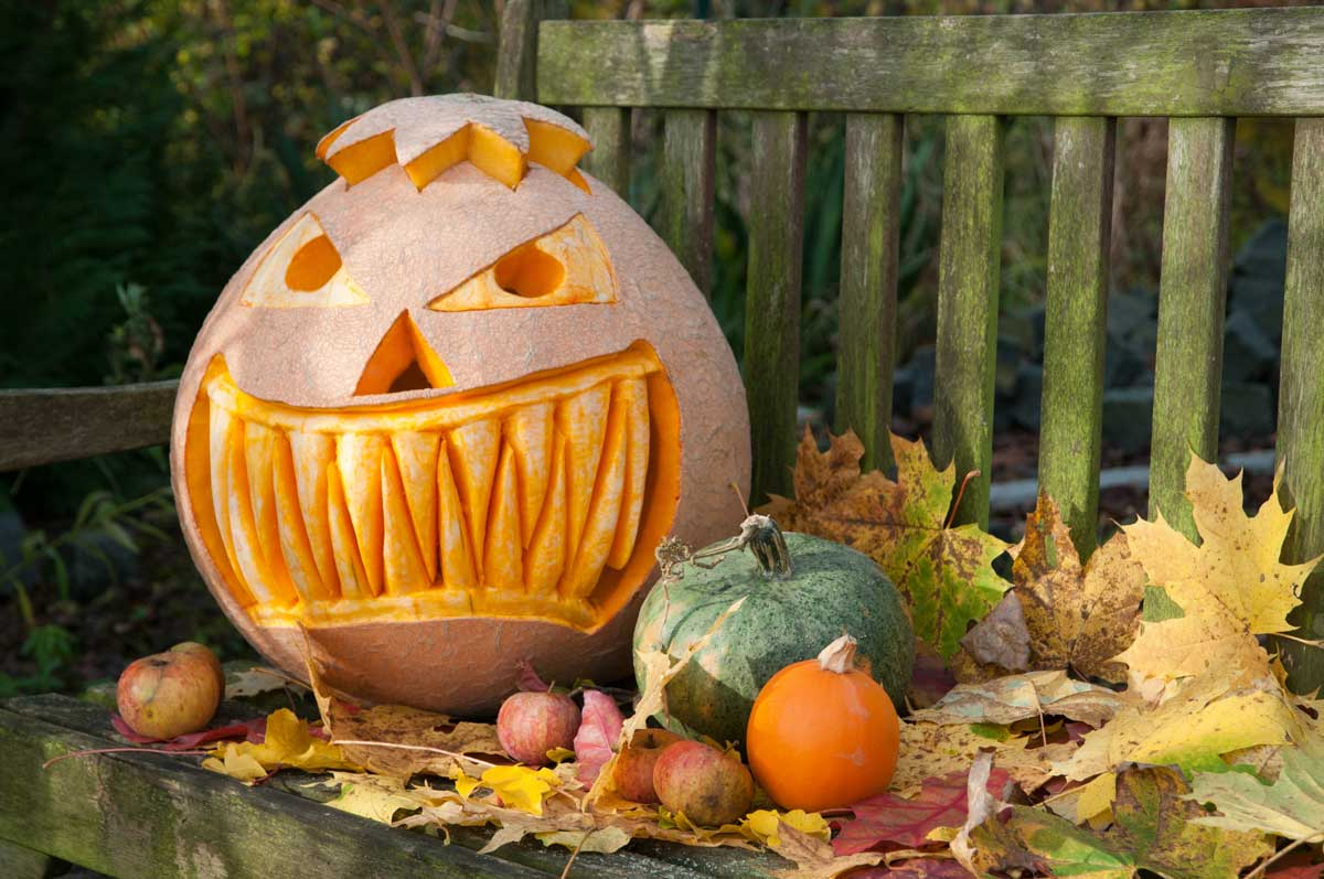 Halloween Landscaping: 6 Ways To Dress Up Your Yard