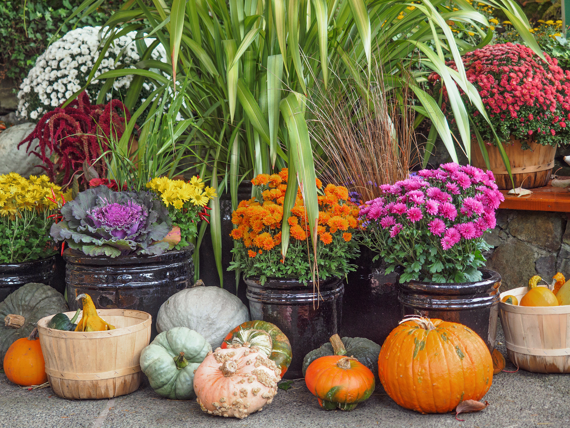 Create A Welcoming Fall Tastic Display With Straw Bales Mums Pumpkins And Decorative Gourds You Can Add Visual Impact Bold Seasonal Colors