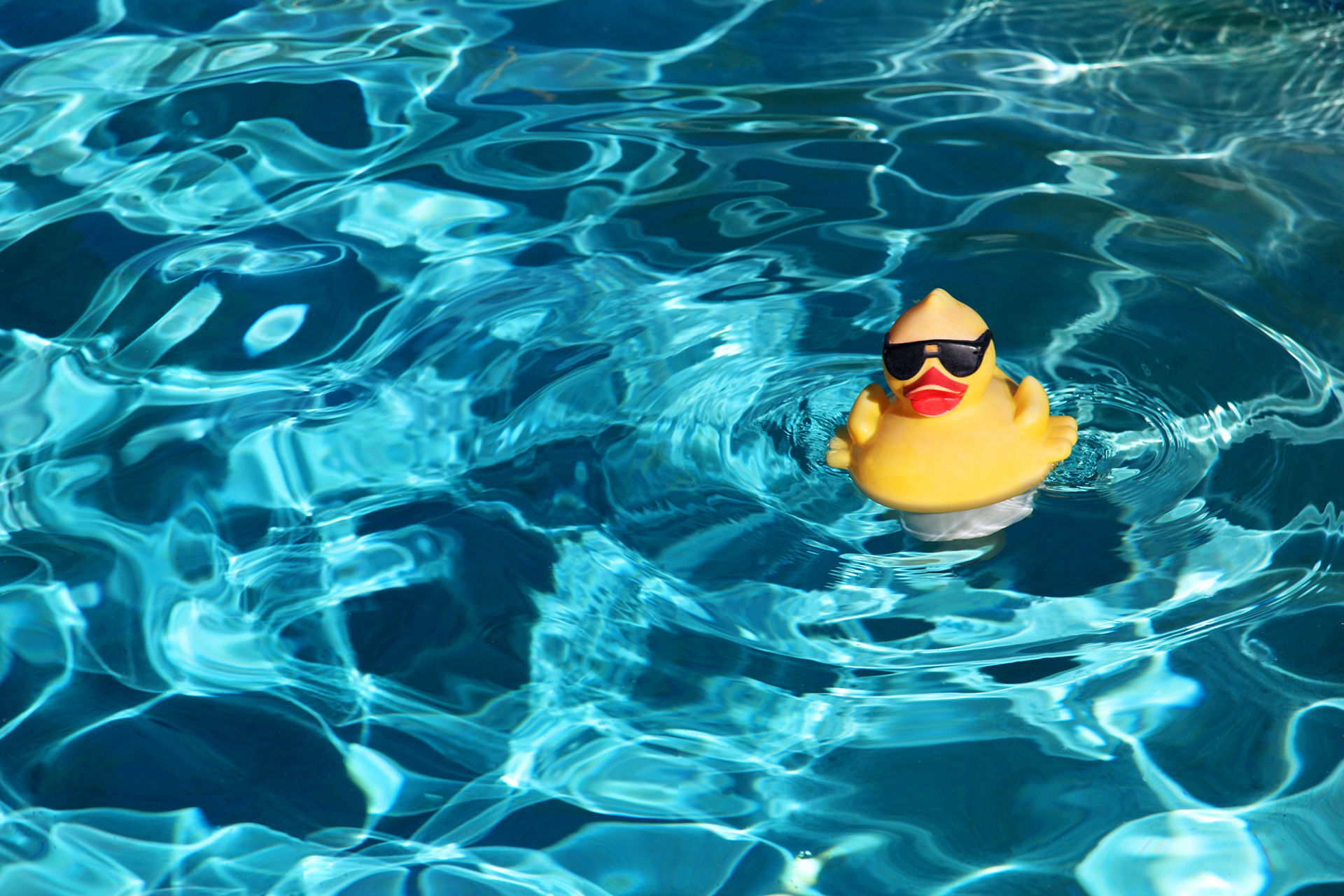 Protecting Your Inground Pool From Wildlife