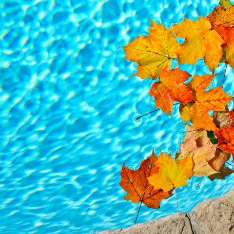 fall-leaves-in-pool-1200