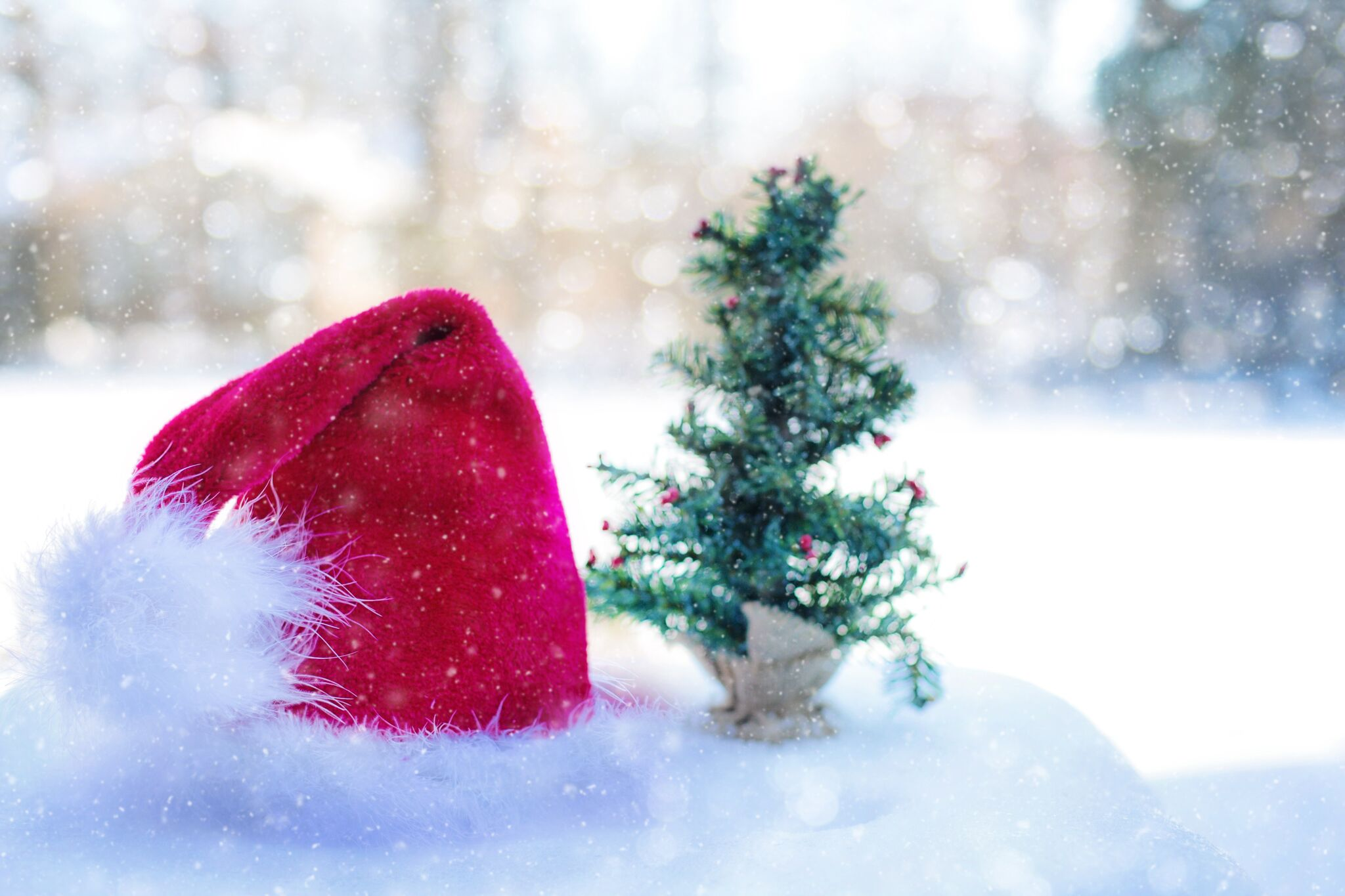 Santa-hat-and-tree-inground-pool-for-christmas